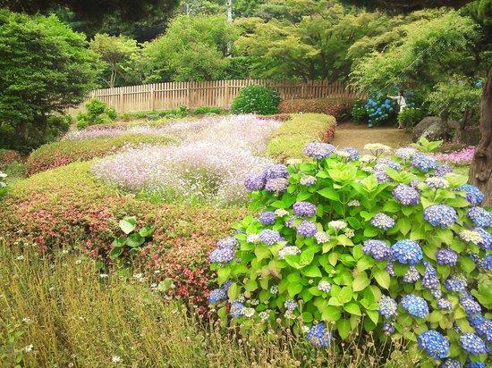 Island Park: 13.06.08【アイランドパーク】紫陽花