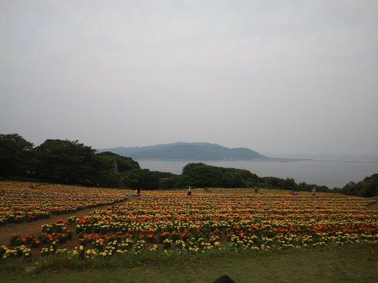 Island Park: 13.06.08【アイランドパーク】花畑