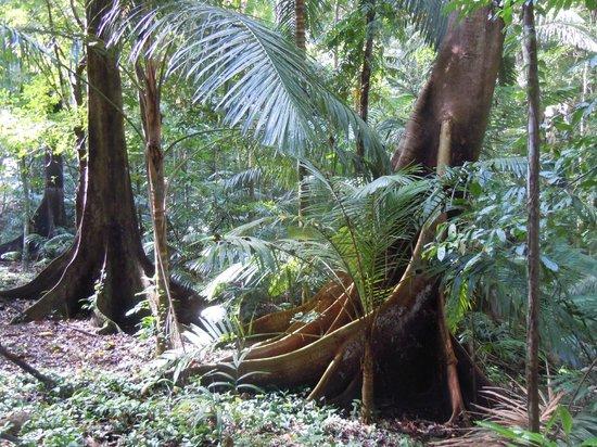 El Nido Resorts Miniloc Island: Rainforest hike - Lagen