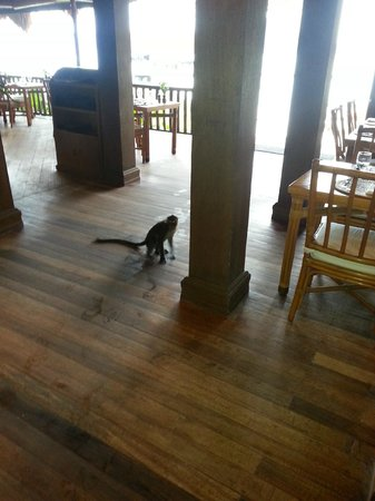 El Nido Resorts Miniloc Island: Wily monkeys try to steal food from the buffet. Staff goes wild.