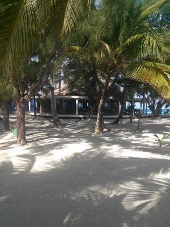 Coco Plum Island Resort: bar