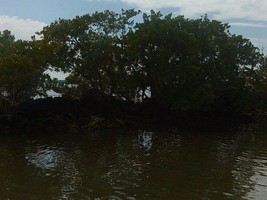 Everglades National Park Boat Tours: Mangroves