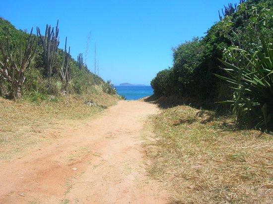 Foca Beach : Camino y asoma el paisaje