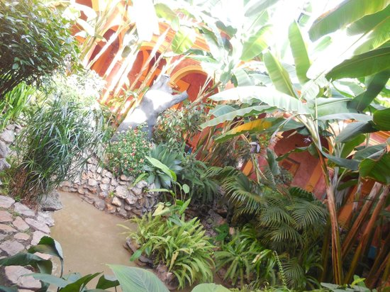 Hotel Casa Mexicana: patio végétal