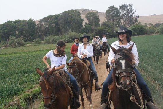 Cabalgata Fotos.Cabalgata Por El Valle Picture Of Cabalgatas Lima