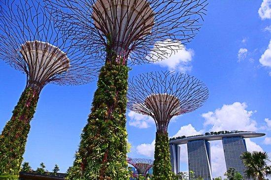 Rainforest tree house fotograf a de gardens by the bay for Jardin botanique singapour