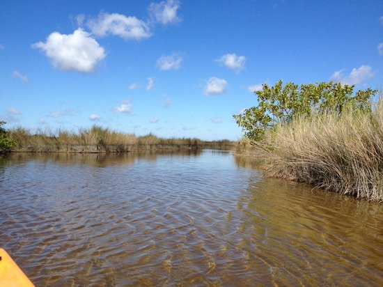 Shurr Adventure Company Day Tours: Everglades lake and saw grass
