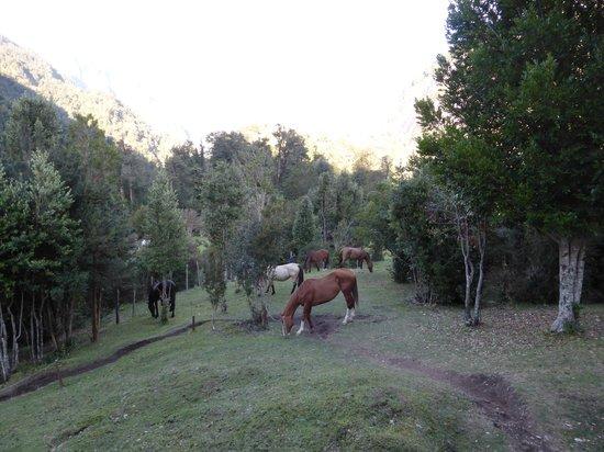 Southern Trips Cochamo: Horses at refugio Cochamo