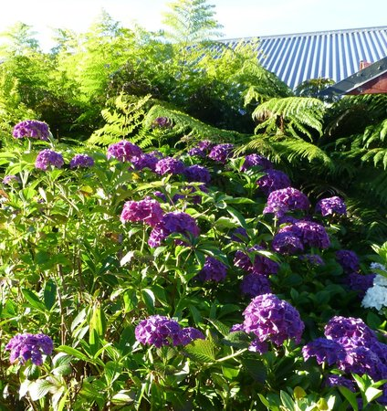 Hilltop Accommodation Catlins: Stunning hydrangeas in top garden