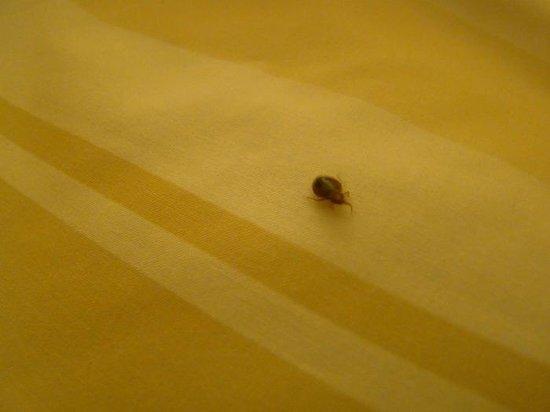 Fort Lauderdale Marriott North: bed bug