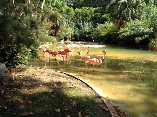 Zoo de Barcelona: Фламинго