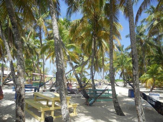 Blue Lagoon Island Beach Day N Reviews