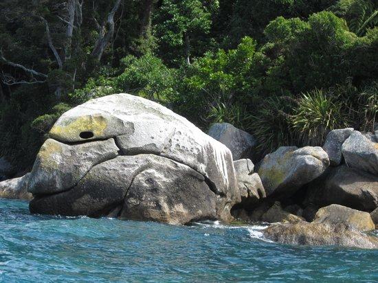 Abel Tasman Eco Tours: Eli's Ninja Turtle