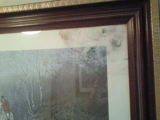 Mold Growing Inside The Picture Frames The Alexander All Suite