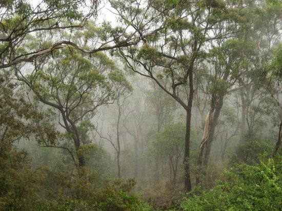 Binna Burra Mountain Lodge : View from the tea room looking down into the forest