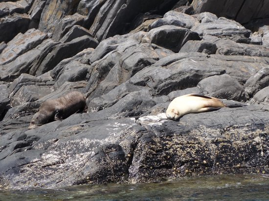 Kangaroo Island Ocean Safari: Lazy seal