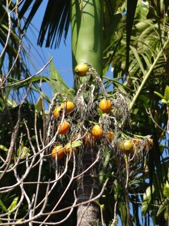 Malisa Villa Suites : Trees surrounding villa 1204