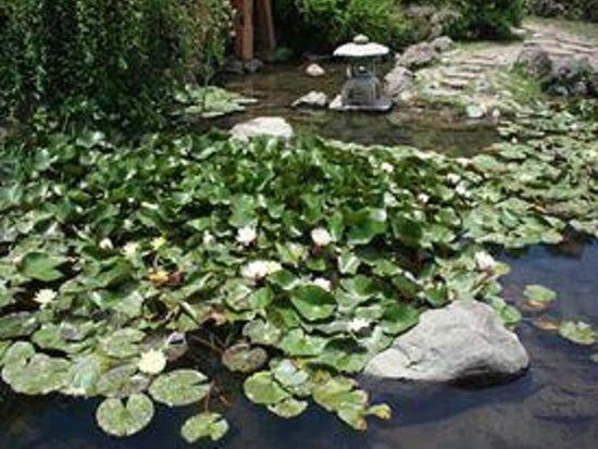Jardin japones santiago lo que se debe saber antes de for Jardin japones de santiago