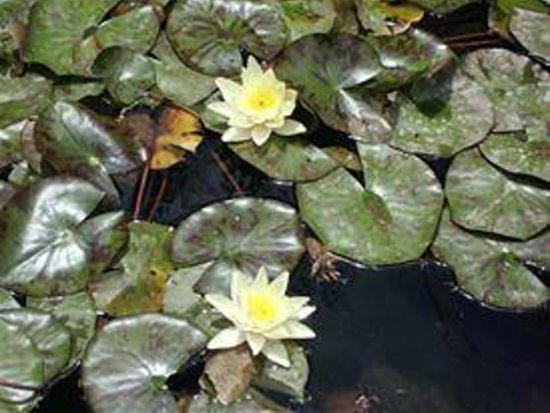 Jardin japones santiago lo que se debe saber antes de Jardin japones informacion