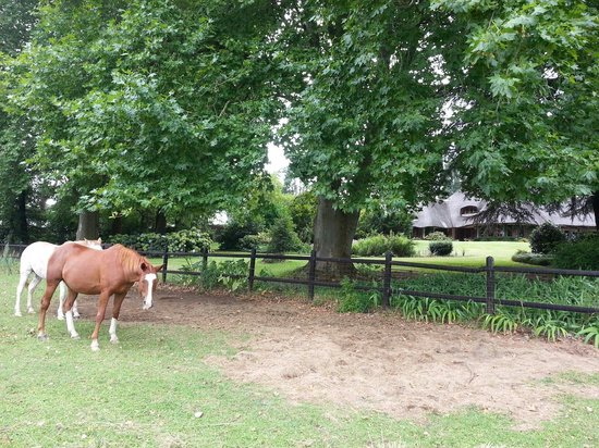 Little Milton Bed & Breakfast : Horses in front of the B&B