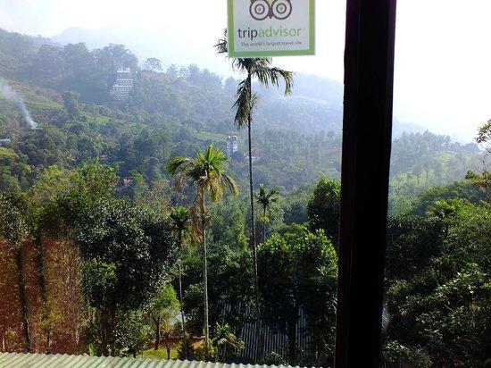 Nest Resort: View from Recption