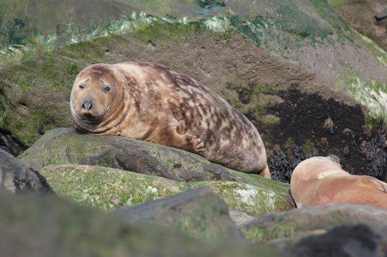 The Villa: Seal watching fantastic