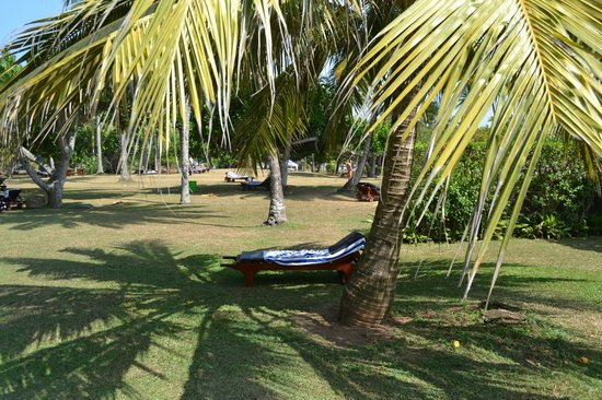 Bentota Beach by Cinnamon: Отдыхать можно на таких лежаках под пальмами, океан рядом