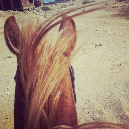 Horse Riding Hurghada: Selina