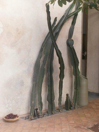 Riad Vendome & Spa Marrakech: cacti