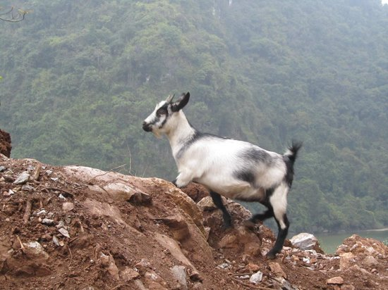 Vega Travel : Mountain coat on Cat Ba