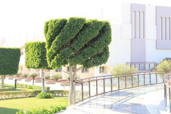 SUNRISE Grand Select Crystal Bay Resort : Вот такие  модные стрижки у деревьев!