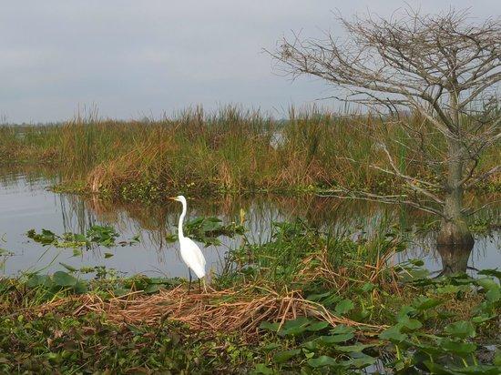 Florida Cracker Airboat Rides & Guide Service : Abundant range of birds, native and migratory