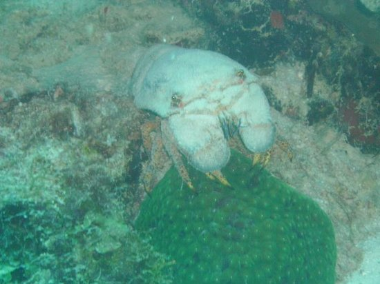 Bonaire Happy Holiday Homes: slipper lobster