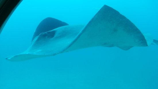 Submarine Safaris Lanzarote Tenerife : Idem