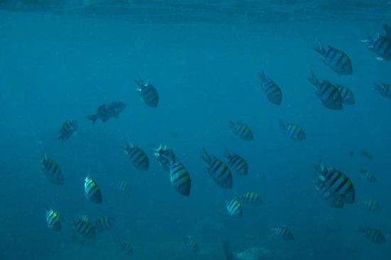 Bayu Cottages Hotel and Restaurant : Коралловый риф у отеля