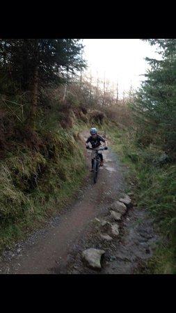 Rostrevor Mountain Bike Trails: East Coast adventure Rostrevor trails