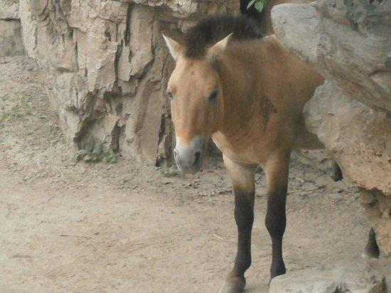 Beijing Zoo: 2012/09/01