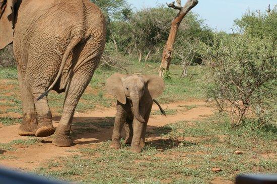 Tau Game Lodge: Elephants are a highlight when on a Tau safari