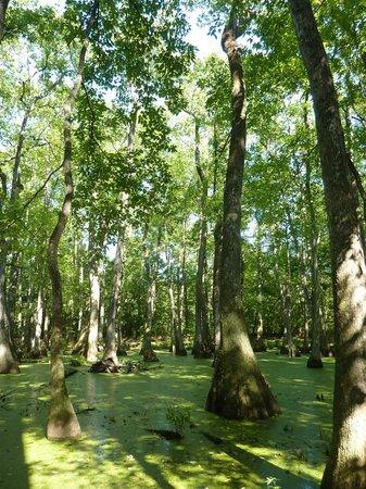 Natchez Trace Parkway: Cypress swamp
