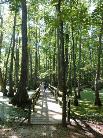 Natchez Trace Parkway: Bridge in Cypress swamp