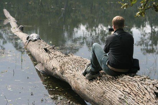 Crocodile Safari Lodge & Camp