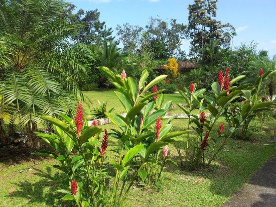Hotel Mountain Paradise: giardino comune