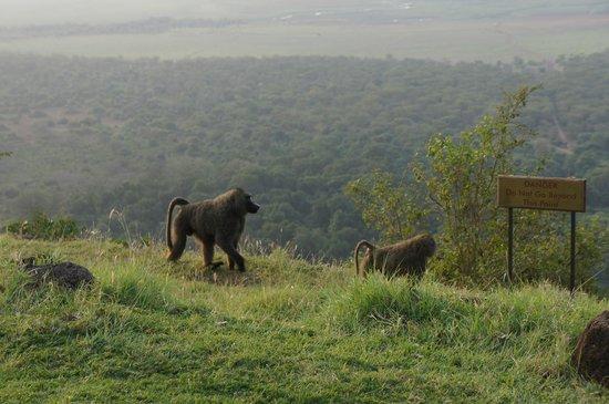 Lake Manyara Wildlife Lodge: Utsikt