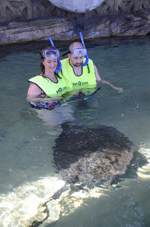 ClubHotel Riu Bachata: stingray at ocean world