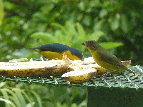 Hotel Fonda Vela : Ospiti del giardino