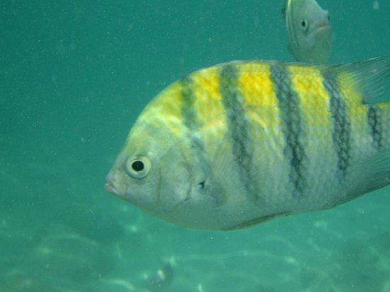 Bucuti & Tara Beach Resort Aruba: snorkel mogelijkheid niet ver van het hotel schitterend