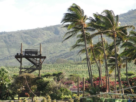 Maui Zipline Company : View of the 1st platform. They start you on the highest one.