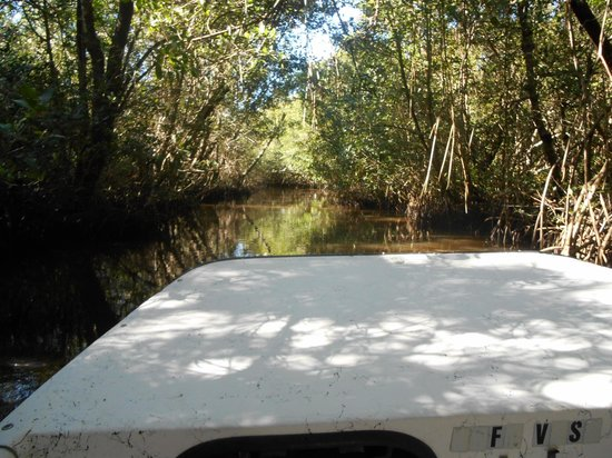 Everglades National Park Boat Tours: Back in the Mangroves