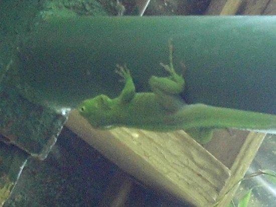 Rocklands Bird Sanctuary: Hello lizard