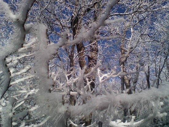 Howard Knob : Trees at top
